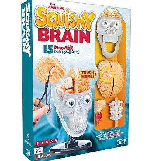 מוח האדם - Squishy Human Brain